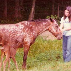 Donna (1970s)